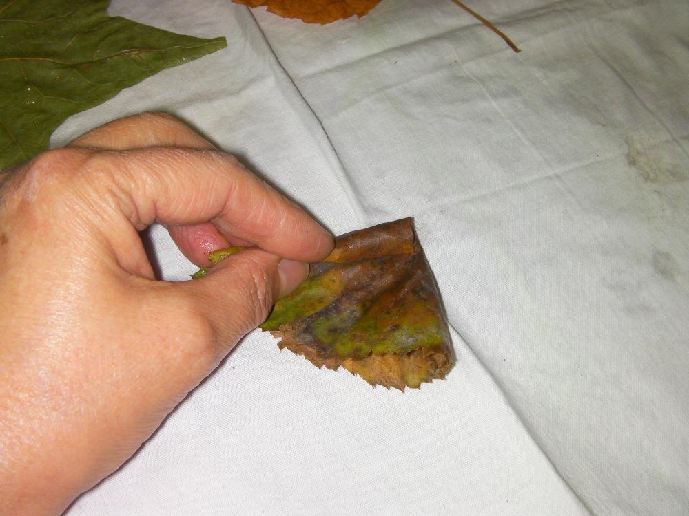 autunno: con le foglie...rose fai da te   (4/6)